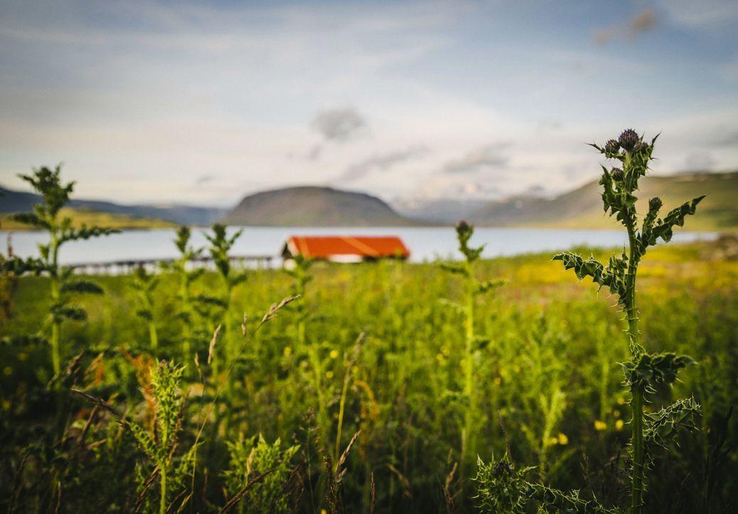 Island ist ein atemberaubendes Land voller Kontraste - riesige Gletscher ragen über wasserspeiende Geysire. Bill Weir nimmt uns mit in das Land von... - Bildquelle: Philip Bloom 2015 Cable News Network. A Time Warner Company. All Rights Reserved.