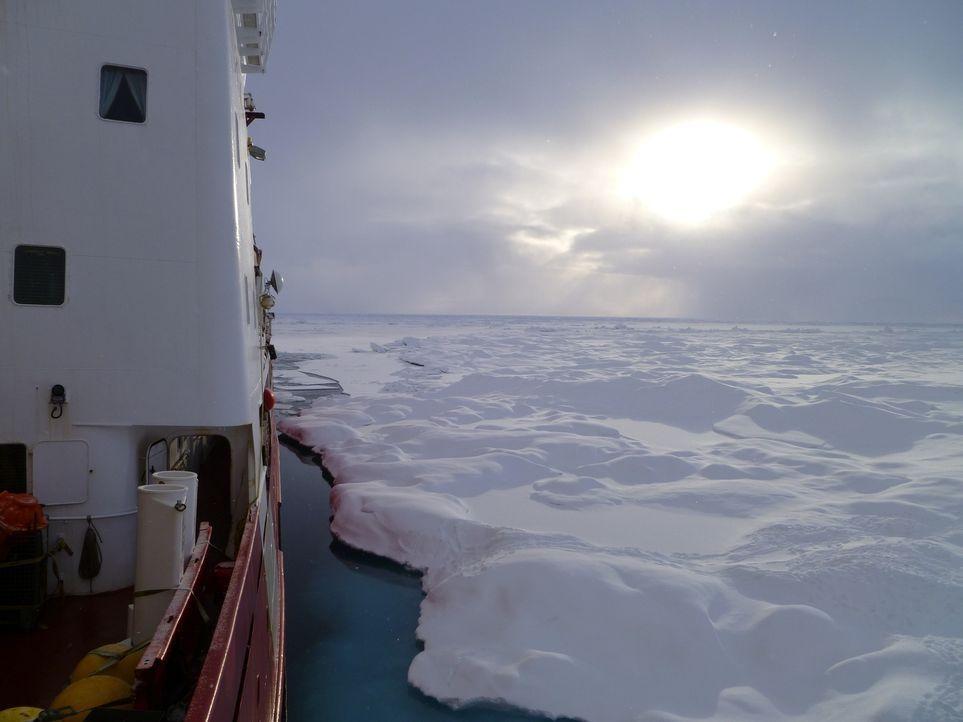 Allein durch das ewige Eis: Das Canadian Coast Guard-Schiff Amundsen ist einer der seltenen Forschungseisbrecher, deren Aufgabe es ist, die Antarkti... - Bildquelle: Exploration Production Inc.