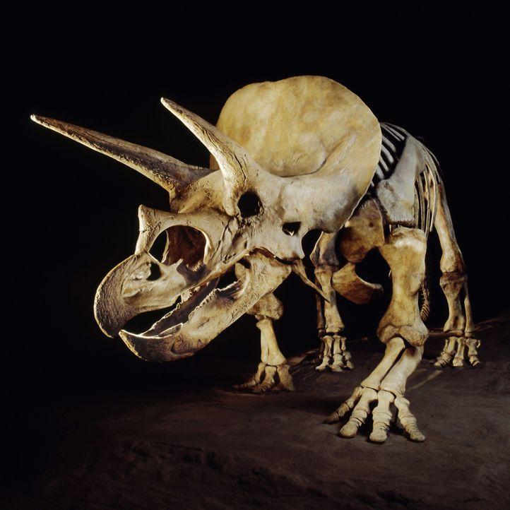 Warum sind die Dinosaurier ausgestorben? Haben Außerirdische sie ausgerottet, um Platz für die Menschheit zu schaffen? - Bildquelle: Superstock