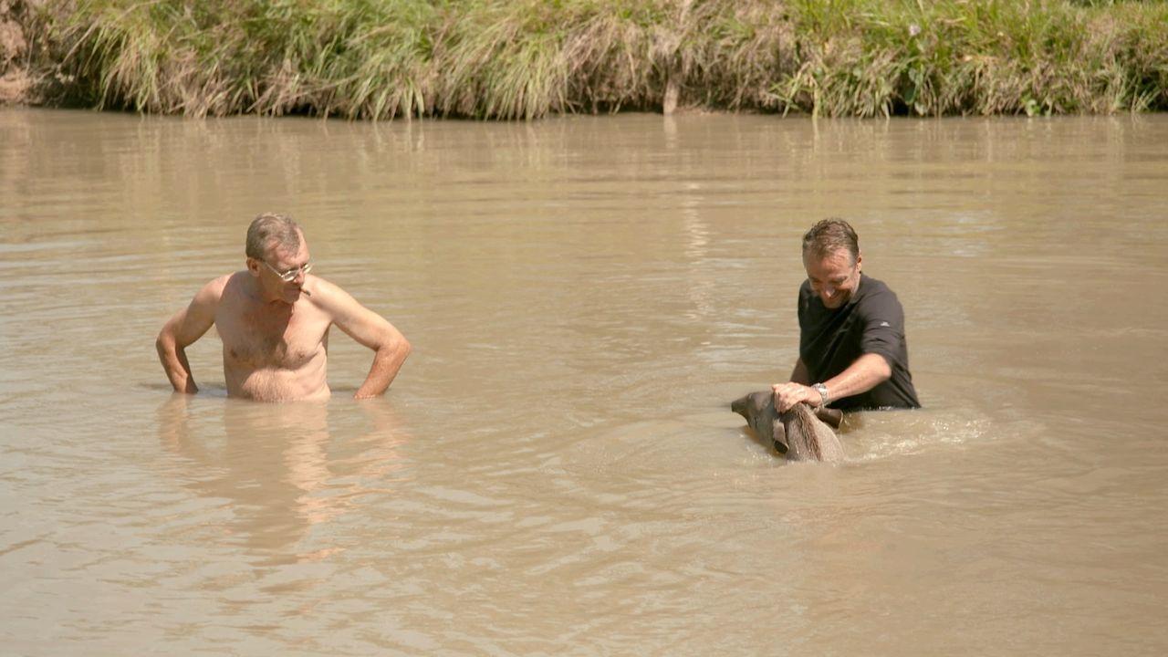 Irgendwo im Nirgendwo Paraguays: Globetrotter Tom (r.) plantscht mit schwimmenden Pferden. Er ist äußerst gespannt, wen er auf seiner abenteuerliche... - Bildquelle: 2013 deMENSEN