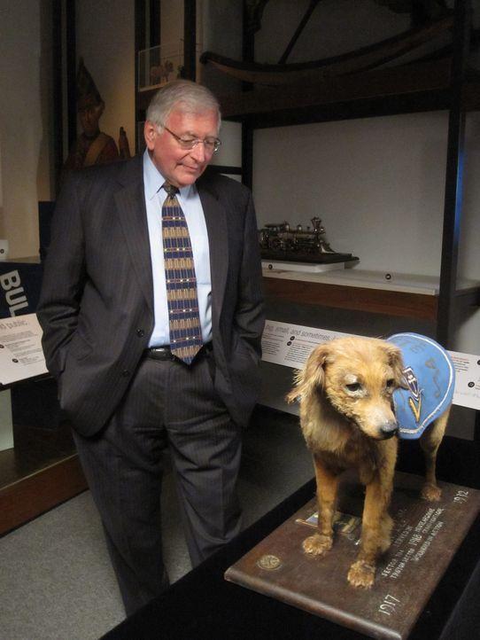 """Tierischer Lebensretter: Im """"Philadelphia History Museum"""" besichtigt Wildman einen ausgestopften Hund, der im Ersten Weltkrieg vielen Menschen das L... - Bildquelle: The Travel Channel, L.L.C. All Rights reserved."""