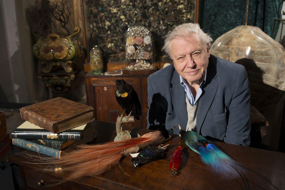 """Der britische Tierforscher- und Filmer David Attenborough fliegt um den Globus, um in """"Attenboroughs Paradiesvögel"""" die schönsten und ausgefallenste... - Bildquelle: Alex Lanchester Alex Lanchester"""