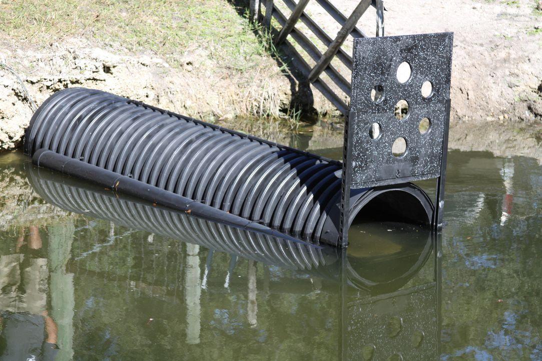 In den Sumpfgebieten im Süden der USA lauern viele Gefahren, wie zum Beispiel Alligatoren und Schlangen. Dennoch haben sich einige Menschen für ein... - Bildquelle: Half Yard Productions