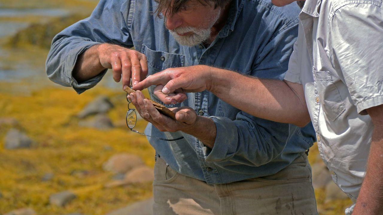 Die Schatzsucher von Oak Island finden in den Sümpfen von Oak Island Hinweise auf ein uraltes Schiffswrack. - Bildquelle: 2016 A&E Television Networks, LLC. All Rights Reserved
