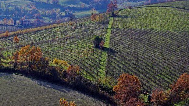 Der Parmaschinken wird im italienischen Parma hergestellt.
