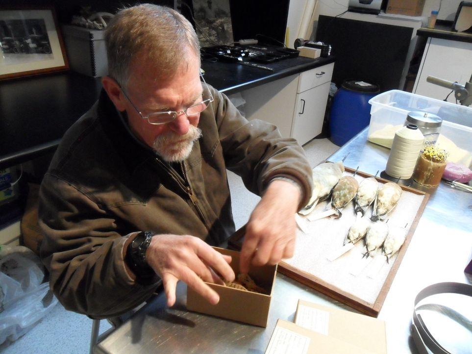 Mysterium oder Vogelkunde: Don Wildman untersucht mit Experten Vögel, die von einer seltsamen Epidemie dahingerafft wurden. - Bildquelle: MMXI The Travel Channel, L.L.C.