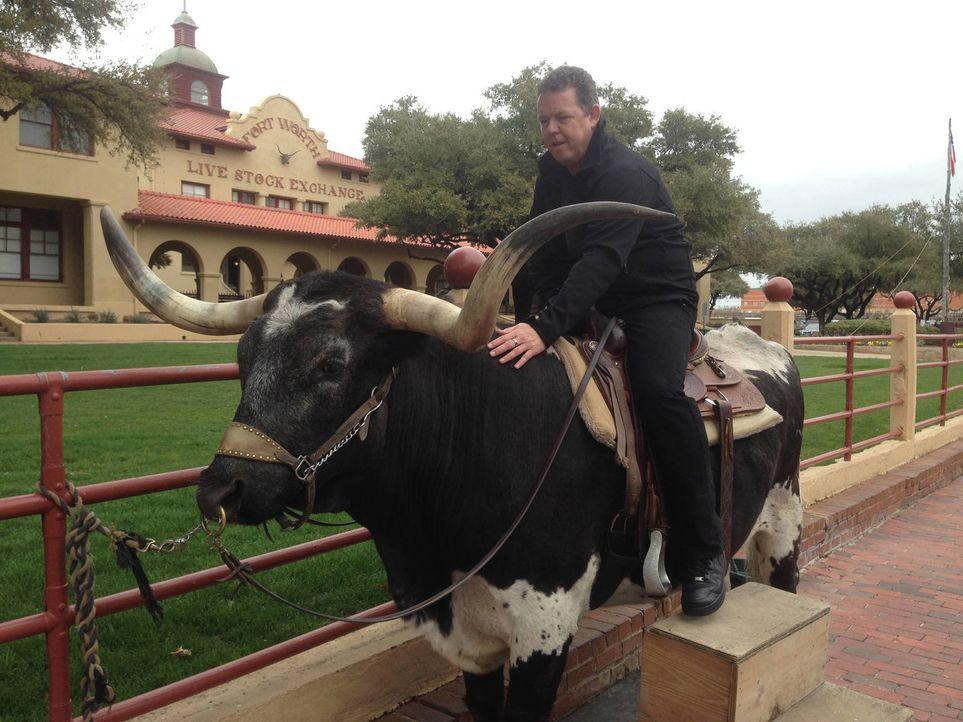 In Texas warten einige Abenteuer auf Toto (Bild) und seinen Kollegen ... - Bildquelle: kabel eins