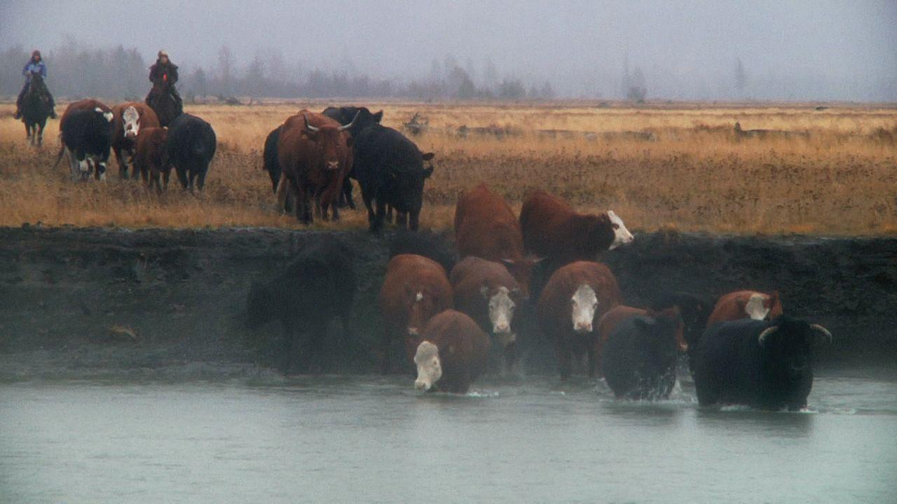 Sie leben am Rande der Wildnis, wo die normalen Regeln des Zusammenlebens ni... - Bildquelle: Discovery