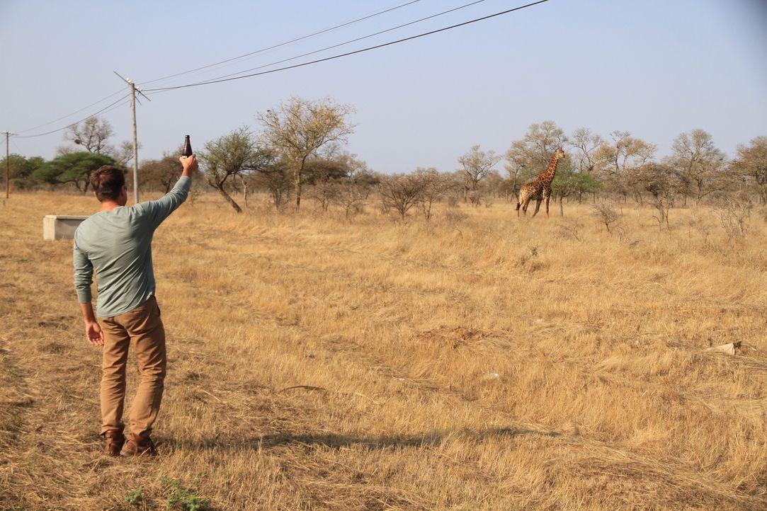 Cheers! Bar Profi Jack Maxwell reist nach Südafrika, um dort die atemberaubende Tierwelt, Natur und die regionalen Gaumenschmeichler wie Zulu-Bier z... - Bildquelle: 2014, The Travel Channel, L.L.C. All Rights Reserved.