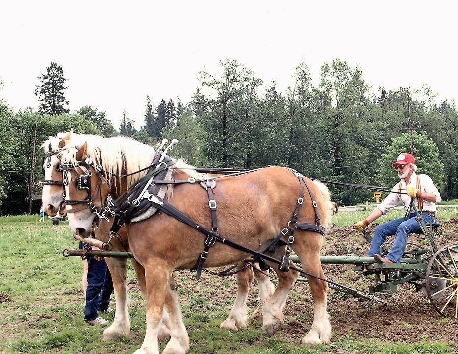 """""""Moderne Wunder"""" widmet sich der einzigartigen Wechselbeziehung zwischen Mensch und Pferd ... - Bildquelle: Jupiter Images"""