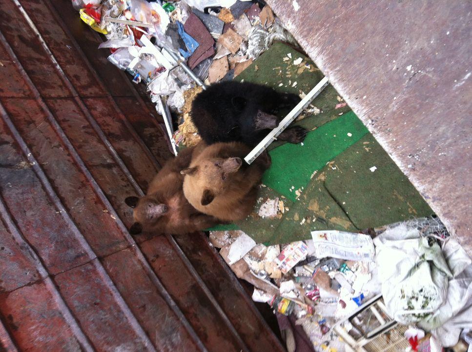 Die Kuh im Treibsand - Bildquelle: Susu Hauser 2012 - Original Productions LLC.