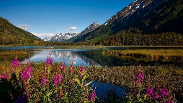 Alaska besticht durch seine landschaftliche Vielfalt: Im Sommer gibt es im La...