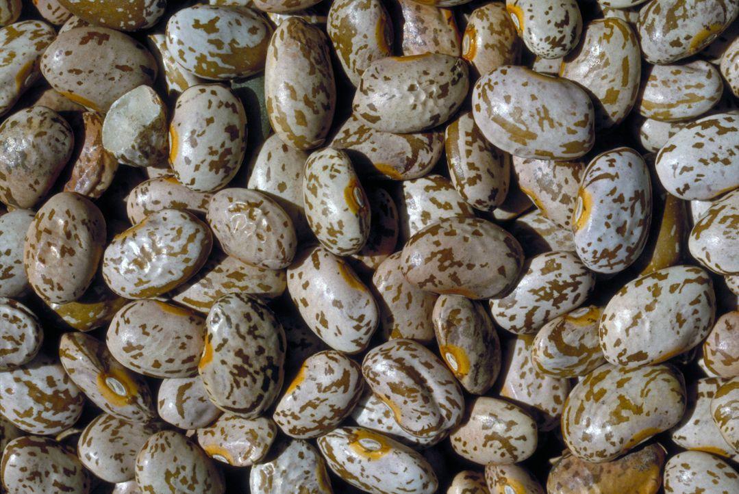 Pinto-Bohnen sind die Nummer eins der getrockneten Bohnen, die in den USA angebaut werden. - Bildquelle: Courtesy Actuality Productions