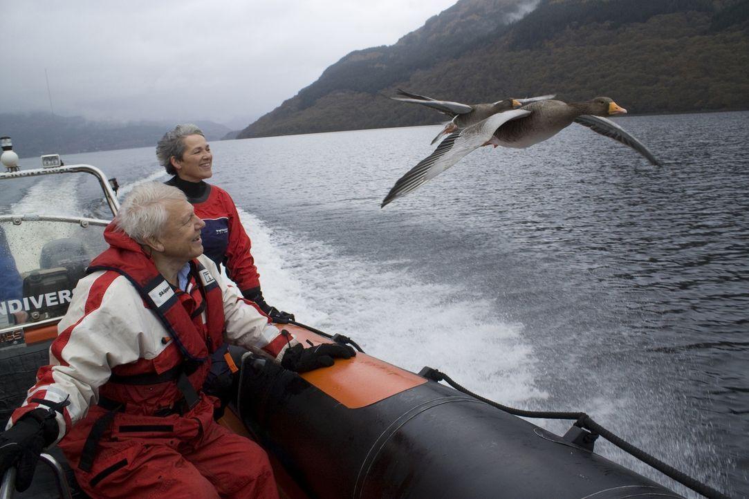 Was ist das Besondere an Gänsen? Der britische Tierfilmer Sir David Attenborough (l.) und Vogelexpertin Rose Buck (r.) studieren in Schottland das V... - Bildquelle: Mary Lou Aitchison Mary Lou Aitchison
