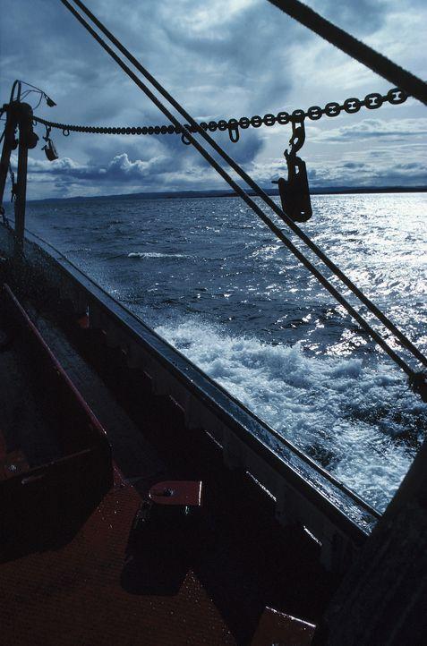 """Die Beringsee zwischen Alaska und Sibirien ist das fischreichste Gewässer der Welt. """"Moderne Wunder"""" begleitet Kapitän Scott Symonds und seine Manns... - Bildquelle: JupiterImages - Photos.com"""