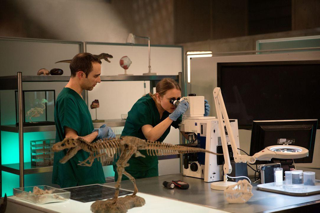 Unter realistischen Bedingungen sezieren vier Veterinäre und Paläontologen eine lebensnahe Rekonstruktion eines anatomisch vollständigen Tyrannosaur... - Bildquelle: National Geographic Channels/Stuart Freedman