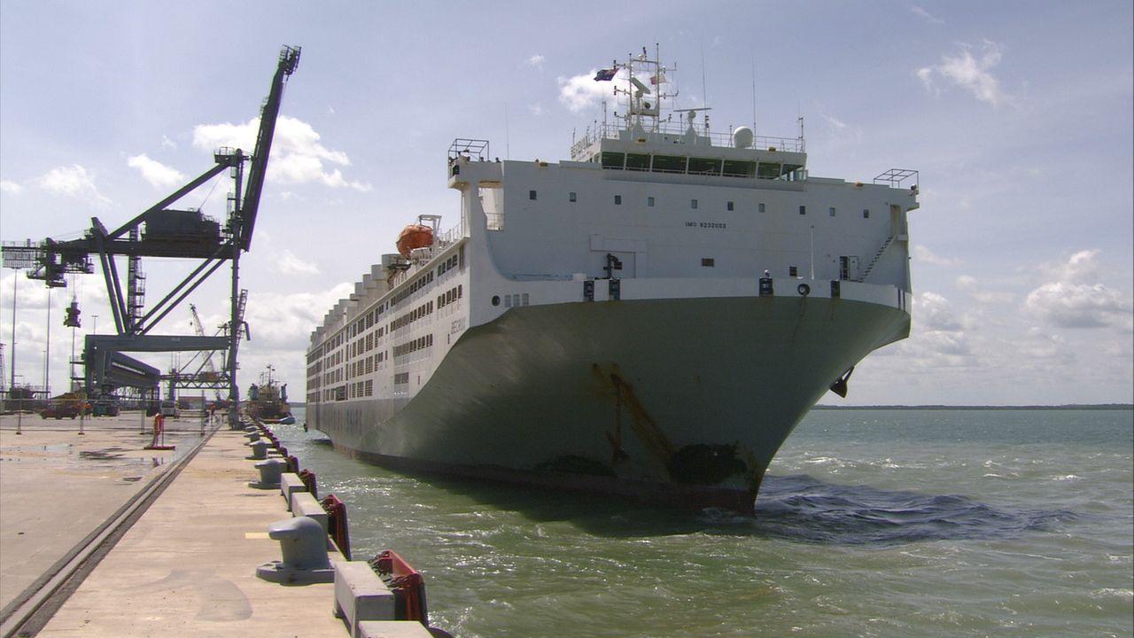 Die MV Becrux ist eine moderne Arche Noah. Das 100 Million Dollar teure Schiff ist auf dem Weg von Darwin nach Jakarta, mit dabei an Bord sind über... - Bildquelle: Exploration Production Inc.