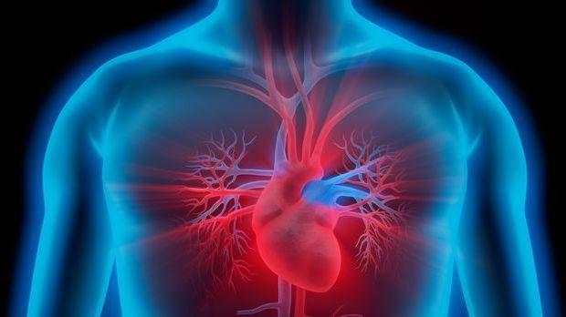Das Herz befindet sich in im Brustraum des Oberkörpers und hat die wichtige A...