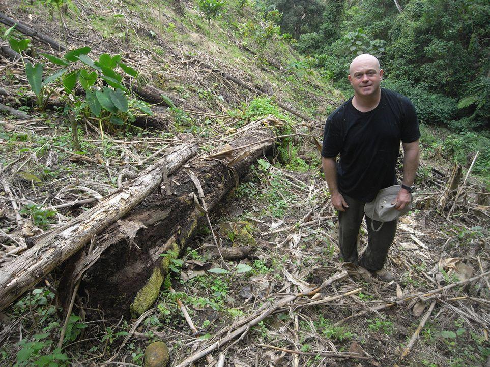 Die Natur leidet, und für viele Probleme, wie den Klimawandel, ist der Mensch mitverantwortlich. Ross Kemp kämpft im Amazonas für die Umwelt ... - Bildquelle: Tiger Aspect Productions 2010