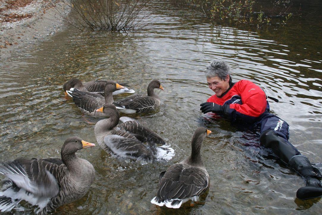 Vogelexpertin Rose Buck (Bild) begleitet Tierfilmer David Attenborough nach Schottland und badet mit den Graugänsen... - Bildquelle: Miles Barton Miles Barton