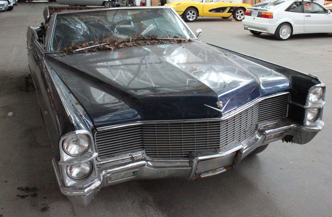 Als der 1965er Cadillac DeVille bei Dan und seinem Team in der Werkstadt ankommt, ist er mit verrotteten Blättern und Mäusekot bedeckt. Dieses Proje... - Bildquelle: Javier Rivera New Dominion Pictures LLC.