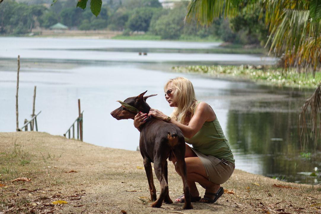 Eine Hundeliebe bis in den Tod: Dobermann-Hündin Jackie gelingt es, die Leiche ihres Frauchens Cher Hughes zu erschnüffeln ... - Bildquelle: Alvaro Acosta Cineflix 2014