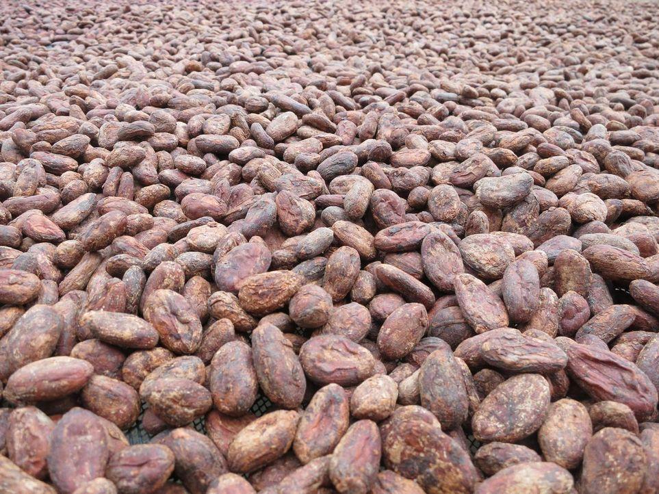 In Peru macht sich Anthony Bourdain zusammen mit seinem Freund Eric Ripert auf die Suche nach dem besten Kakao der Welt ... - Bildquelle: 2013 Cable News Network, Inc. A TimeWarner Company. All rights reserved.