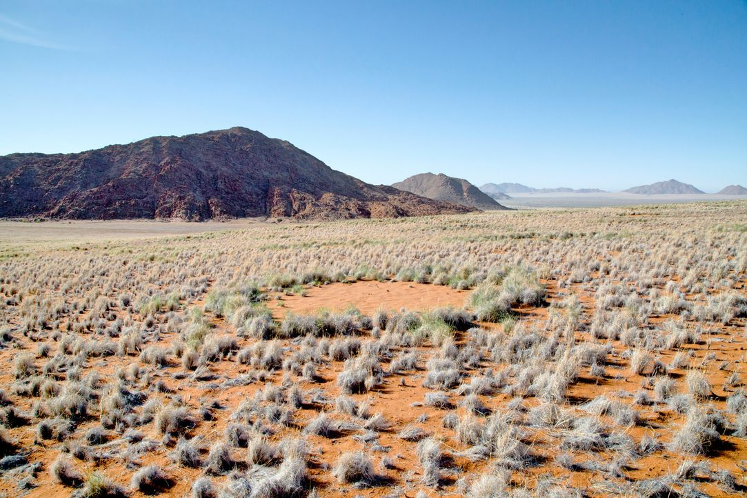 Eine der seltsamsten Landschaften der Welt liegt in Namibia. Was verursacht diese merkwürdigen Kreise in der Natur ? - Bildquelle: Allison Laux BBC 2015