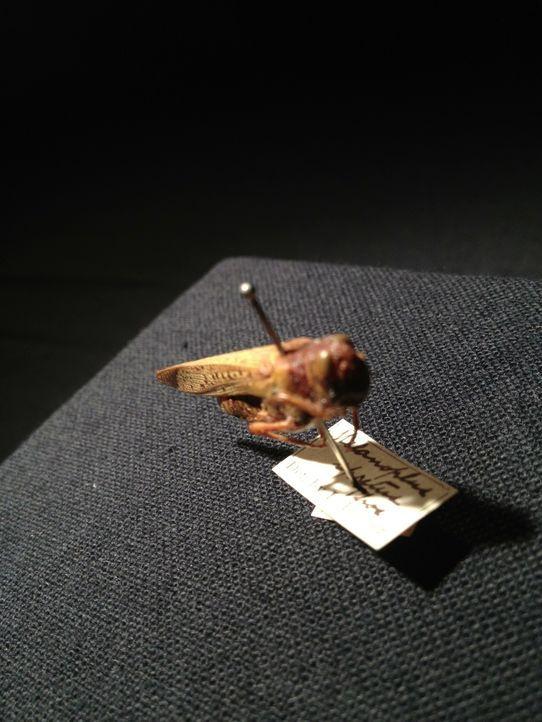 Ein Insekt, welches für die Verwüstung ganzer Landstriche in Amerika verantwortlich sein soll? Don Wildman nimmt dieses kleine Tierchen genauer unte... - Bildquelle: 2014, The Travel Channel, L.L.C. All Rights Reserved.