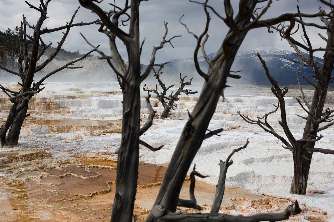 Der Yellowstone Nationalpark im Herzen Nordamerikas ist der älteste Nationalpark der Welt: Knapp drei Millionen Besucher besuchen jedes Jahr den Par... - Bildquelle: Paul D. Stewart 2008 BBC